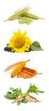 сельскохозяйственные продукты Стоковая Фотография