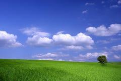 Сельскохозяйствення угодье Стоковые Фото