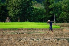 Сельчанин в Лаосе идя в поля стоковые фото