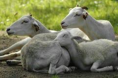Семейная жизнь Стоковая Фотография RF