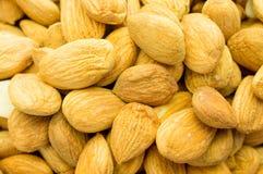Семена абрикоса Стоковое фото RF