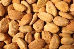 Семена абрикоса Стоковая Фотография RF