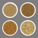 Семена анисовки, тмина, кориандра и фенхеля в белых шарах над серым цветом стоковая фотография