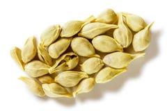 Семена апельсина Стоковые Фотографии RF