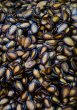 Семена арбуза Стоковое Изображение RF