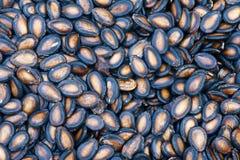 Семена арбуза Стоковые Фото