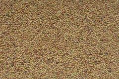 Семена альфальфы Стоковое Изображение