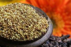 Семена биллиарда стоковая фотография