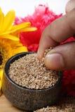 Семена биллиарда Стоковые Фото