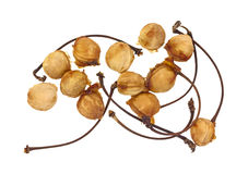 Семена вишни Бинга Стоковая Фотография RF