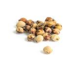 семена вишни Стоковое фото RF