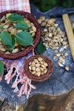 Семена высушенного абрикоса Стоковые Фото