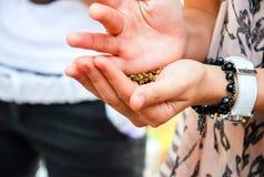 Семена в руках стоковое изображение rf
