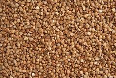 семена гречихи Стоковые Изображения RF
