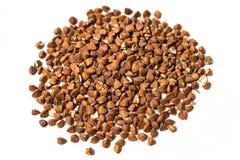 Семена гречихи Стоковые Фото