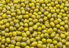 Семена зеленого грамма Стоковые Изображения RF