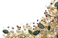 семена зерен хлопьев Стоковые Фотографии RF