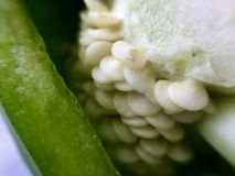 Семена зеленого перца Стоковые Фото