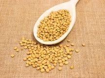 Семена зеленых чечевиц на холсте Стоковое Изображение