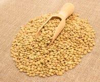 Семена зеленых чечевиц на холсте Стоковое Фото