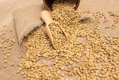 Семена зеленых чечевиц на холсте Стоковая Фотография