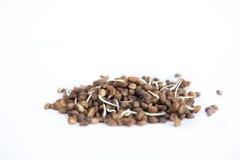 Семена изолированные на белизне Стоковые Изображения RF