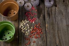Семена и баки Стоковое фото RF