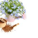 Семена и цветки льна изолированные на белизне Стоковое Изображение