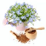 Семена и цветки льна на белой предпосылке Стоковые Изображения RF