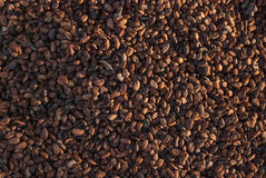 Семена какао засыхания с солнечностью в kidul gunung, jogjakarta, Индонезии Стоковое фото RF