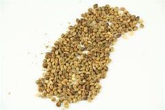 Семена 4 конопли стоковые фото