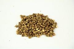 Семена 2 конопли стоковые фото