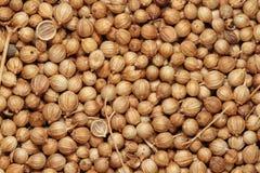 Семена кориандра Стоковое Изображение RF
