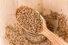 Семена кориандра Стоковые Фотографии RF