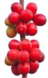 Семена кофе стоковое изображение