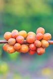 Семена кофе стоковая фотография rf