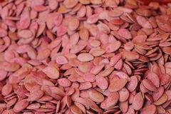 семена красного цвета дыни Стоковые Изображения RF