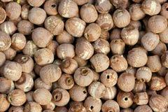 семена красного цвета лотоса стоковая фотография rf