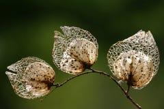 семена крупного плана Стоковые Изображения RF