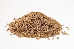 семена макроса укропа Стоковые Фото