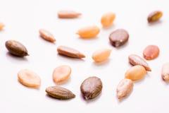 Семена макроса Стоковая Фотография RF