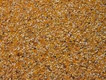 семена мозоли Стоковые Фото