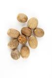 Семена муската изолированные на белой предпосылке Стоковое фото RF