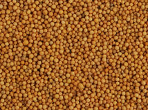 семена мустарда Стоковые Фото