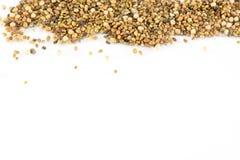Семена на белой предпосылке Стоковая Фотография RF