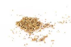 Семена на белой предпосылке Стоковые Фото