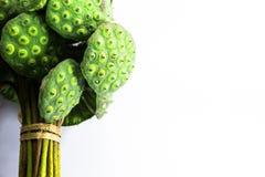 Семена лотоса Стоковое Изображение RF