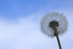 Семена одуванчика на голубом небе Стоковая Фотография RF