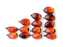 Семена пальмового масла Стоковые Изображения RF