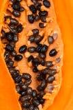 Семена папапайи закрывают стоковое изображение rf